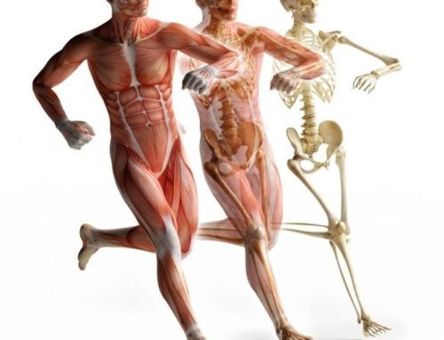 Know More About Fascia A Connecting Tissue